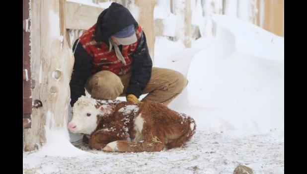 "Robin Reinhold won the first place and also overall winner in the recent Farm Bureau photo contest with ""A Warm Heart."""