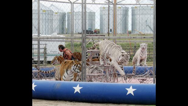 The circus' trained tiger act seems to always be an audience favorite.